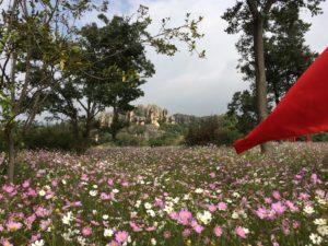 TCM-Vorsorge im Frühjahr und Sommer